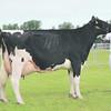 Notts Dairy champ