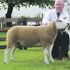 Notts Sheep champ