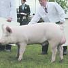 Notts Pig