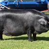 Notts Piggy
