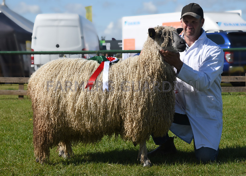 Notts wool on the hoof
