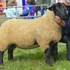 PEEBLES SHOW 15 SUFFOLK CHAMP