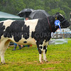 Reserve inter-breed beef champion from??
