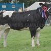 Any Other Continental Breed Champion at Perth Show 16<br /> A British Blue from D & L McKerrowNochnary Farm, Freuchie, Fife.