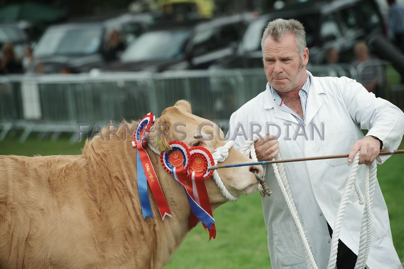 Wilson Peters, Monzie, Crieff seen with his Commercial Cattle Champion at Perth Show 16