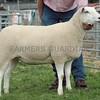 Lleyn Sheep Champion at Perth Show 16. Gimmer from Finlay McGowan, Incheoch Farms, Alyth.