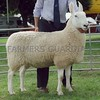 Border Leicester Champion at Perth Show 16. Gimmer from S &A Watson,Culticheldoch Coottage, Muthill, Crieff,