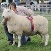 Cheviot Champion at Perth Show from A.Grant & T Wright, Innergellie House, Kilrenny, Anstruther.