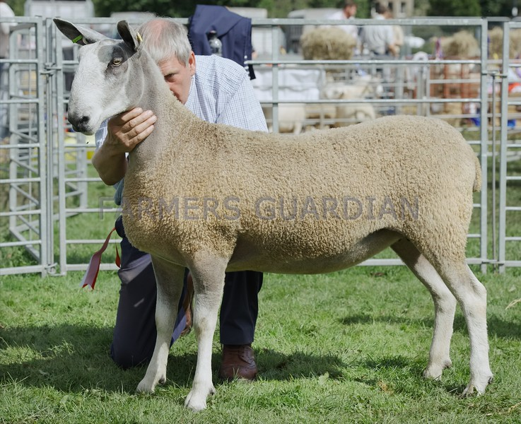 Border Leicester Champion at Perth Show from Robert Neil, Broadleys, Dunning.