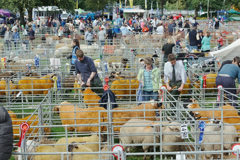 The Sheep lines at Perth Show