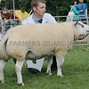 Any Other Breed of Continental Sheep Champion at Pert Show a Beltex Ram from Ian Reid, Isle Cottage,Methven.
