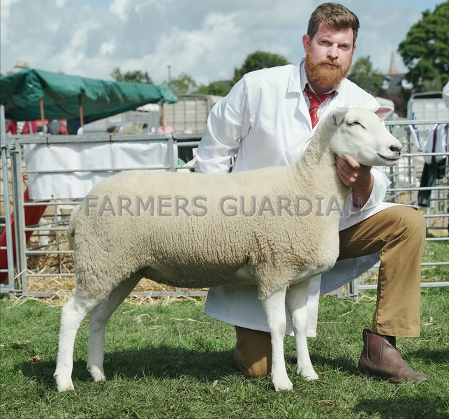 Lleyn  Champion at Perth Show from Hugh Gillan, Drumcarrow Farm,Peat Inn, Cupar