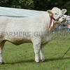"Charolais Cattle Champion at Perth Show "" Balthayock Lisa"" from Major David Walter,Balthayock Home Farm, Perth."