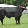 "Aberdeen Angus Champion at Pert Show ""Cardona Edwin"" from J R Galloway, Cardona Farm, Doune."