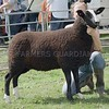 Zwartble Champion at Perth Show from Joy Koelle, Finnich Blair Farm, Croftamie, Drymen.