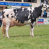 The Holstein champion, Willsbro Goldwyn Kitty 5 from A. H. Wilson and Son.