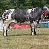 The British Blue champion, Solway View Elegance from Kevin Watret of Annan, Dumfriesshire.