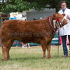 The commercial beef champion, heifer Temptation from T. A. and L. C. Lyon and Son of Thurlby Bourne, Lincolnshire.
