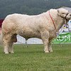 The Charolais champion, Barnsford Ferny from Boden and Davies of Mellor, Stockport.
