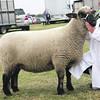 Interbreed Sheep Champion No  235 Mather ANM-RCB-914-4106
