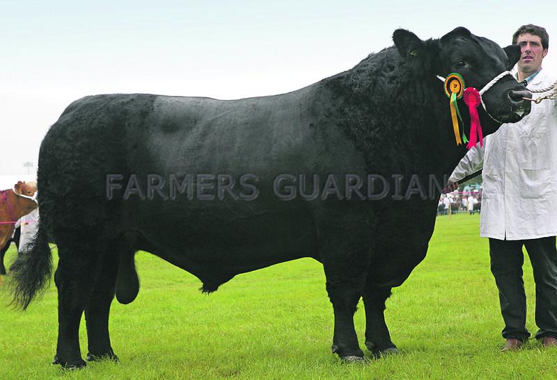 Aberdeen Angus Champion No  5 Glympton ANM-RCB-914-4020