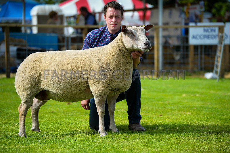Charollais champion an aged ewe from Messrs G and B Ingram.