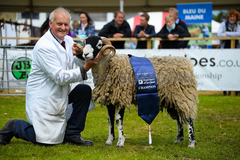Swaledale champion a Shearling Ram from Messrs Brogden.