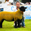Suffolk champion a ewe lamb from James C Innes and Sons.