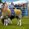 Bluefaced Leicester Traditional type champion a tup from R.A. McClymont and Sons.