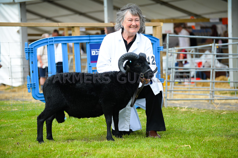 Hebridean champion a Shearling ewe from Mrs Victoria Mason.