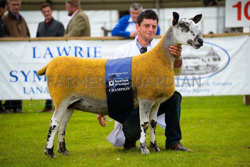 Bluefaced Leicester colour type Champion a ewe from Mr M.R Thornborrow and Sons.
