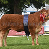 Highland Limousin