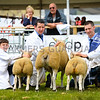 Commercial champion a Texel x ewe with lambs at foot from Mr Andrew Baillie.