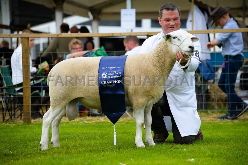 Lleyn champion a Sheraling Ram from J J Kingan.