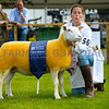 British Berrichon champion a ewe from Mrs Frances Barbour.
