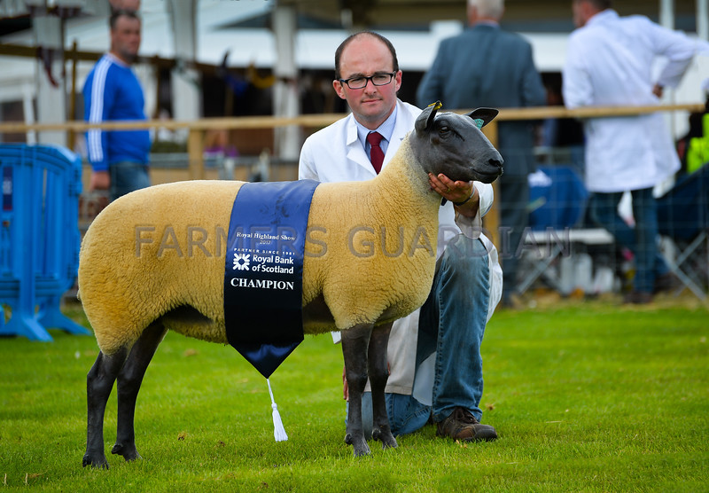 Bleu Du Maine champion a shearling ewe from Mr and Mrs J.E. and M. P. Vile.