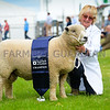 Ryeland Champion a Shearling ram from Mrs Susan Bryden.