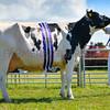 Holstein champion Sandash Sept Storm Nellie from Sandash farms Ltd.
