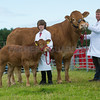 The Manx bred champion, Limousin cow and calf, Manin Ingrid and Napoleon from R. Crookall.