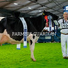 Baldonnel FM Sunshine owned by Cyril Dowling, Baldonnel, County Dublin was the Holstein Champion and Supreme Interbreed Champion  at the Royal Ulster Winter Fair. Cyril is pictured along with his son John. Photograph: Columba O'Hare/ Newry.ie