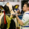 On show at the Royal Ulster Winter Fair. Photograph: Columba O'Hare/ Newry.ie