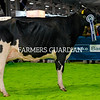 Philip Jones, Hallow Holsteins, Gorey, with Hallow Atwood Carmen their Reserve Champion Holstein and Interbreed Honorable Mention at the Royal Ulster Winter Fair. Photograph: Columba O'Hare/ Newry.ie
