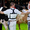 John Dowling, Baldonnel, County Dublin in exuberent form after his Holstein won the Interbreed Championship at the Royal Ulster Winter Fair. Photograph: Columba O'Hare/ Newry.ie