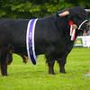 Highland champion Jamie of Hisland from J2 Farming.
