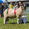 The Derbyshire Gritstone champion, a shearling ram from Claire V. Chapple-Gill of Llandrindod Wells, Powys.