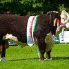 Hereford and Inter-breed champion Hereford bull Normanton 1 Mr Lovett from T.D. and W.T. Livesey.