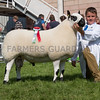 The Kerry Hill champion a shearling ewe from Tom Ryan Evans of Four Crosses, Powys.