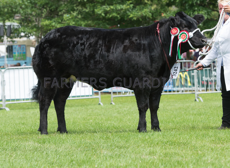 The Commercial Beef champion, Lady Gaga from Charlotte Alford of Blackborough, Cullompton, Devon.