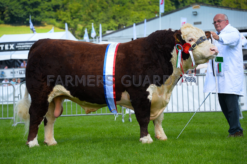 Hereford champion Bakgard 1 Keno from DE, E.D. and A. L. Jones.