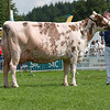 The Ayrshire champion, Sandyford Mayflower from E. T. Tomlinson and Son of Loughborough, Leicestershire.